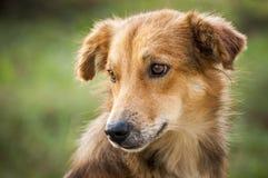 Beste vriend-hond 2 stock afbeeldingen