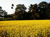 Bester Landwirtschaftsboden stockbild