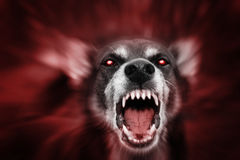 Bestia asustadiza observada que brilla intensamente roja Imagen de archivo