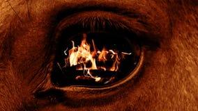 Bestia dell'occhio archivi video