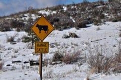 Bestiame al pascolo libero Immagine Stock Libera da Diritti