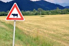 Bestiame che attraversa il segnale stradale accanto al campo vuoto Fotografie Stock Libere da Diritti