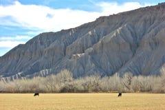 Bestiame che vive su terra dell'altro mondo Fotografia Stock