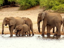 Animali africani del sud Fotografia Stock