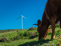 Bestiame ed energia Immagine Stock