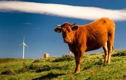 Bestiame ed energia III Fotografie Stock