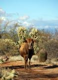 Bestiame libero dell'intervallo Fotografie Stock