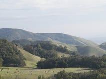 Bestiame nella valle fotografia stock libera da diritti