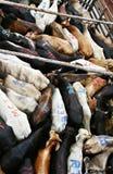 Bestiame sulla barca immagine stock