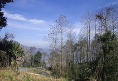 Bestimmte Ansicht von Yuanyang-Reis-Terrassen Stockfotografie