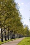 Bestrating op een stadspark Stock Fotografie