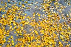 Bestratingstextuur De oude bestrating van de granietsteen in het park Hoogste mening Het graniet cobblestoned bestratingsachtergr stock foto's