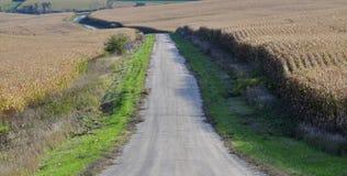 Bestreuen Sie Landstraße zwischen zwei Maisfeldern mit kies, die zum Ernten bereit sind lizenzfreie stockfotografie