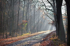 Bestreuen Sie Straße in den Nebel mit Kies lizenzfreie stockfotografie