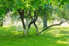 Bestrooi water die voor de boom in de tuin werken met de zonneschijn stock fotografie