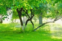 Bestrooi water die voor de boom in de tuin werken met de zonneschijn royalty-vrije stock foto's