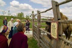 Besuchen Sie die Veterane des Weltkriegs 2 Safari Park in der Kaluga-Region von Russland lizenzfreie stockbilder