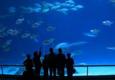 Besucher am Aquarium Stockbilder