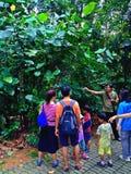 Besucher, die Anlagen im Wald studieren Stockfotografie