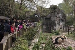 Besucher, die große Pandas betrachten Stockbild