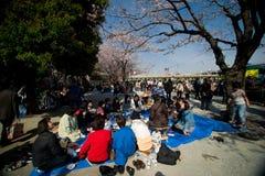 Besucher genießen ihr Picknick unter den Kirschblüte-Bäumen Stockbilder
