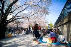 Besucher genießen ihr Picknick unter den Kirschblüte-Bäumen Stockfotos
