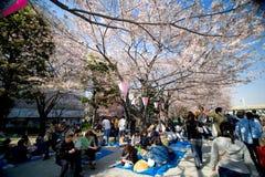 Besucher genießen ihr Picknick unter den Kirschblüte-Bäumen Stockfotografie