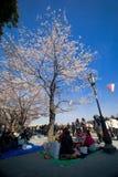 Besucher genießen ihr Picknick unter den Kirschblüte-Bäumen Lizenzfreies Stockbild