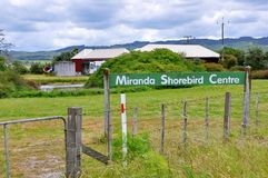 Besuchermitte Pukorokoro Miranda Shorebird stockbilder