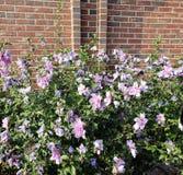 Besutiful紫色花 免版税图库摄影