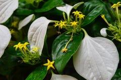 Besynnerlig växt Arkivbild