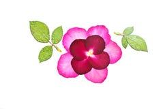 Betätigen Sie rosafarbene Blume Stockbild