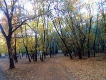 Betäubungsfahrstraße im Wald stockfotos