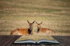 Betäubungsporträt des Rotwilds Hinter in der bunten Herbstwaldlandschaft, die aus Seiten im magischen Geschichtenbuch herauskommt lizenzfreie stockfotografie