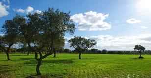 Beta av ekar och göra grön ängen med blå himmel som plaskas med moln Fotografering för Bildbyråer
