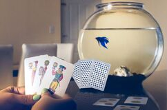 Beta blue fish cards italian fishtank