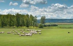 beta får Fotografering för Bildbyråer