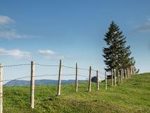 Beta med staketet och gran Royaltyfri Bild