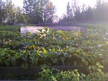 Beta på trädgården, Sibirien, sommarställe i Augusti fotografering för bildbyråer