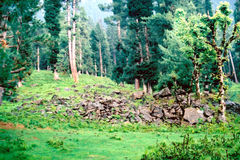 Betaab valley (2) Royalty Free Stock Images