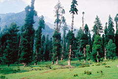 Betaab valley (3). Betaab valley in Kashmir in India Royalty Free Stock Images