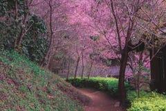 Betaalt wolk sakurabloemen royalty-vrije stock fotografie