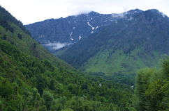 Betab Dolinny greenery w Pahalgam-8 Zdjęcia Royalty Free