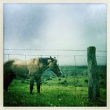 betande häst för fält Royaltyfria Foton