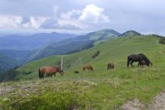 betande hästar Royaltyfri Bild