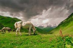 betande hästar Arkivbild