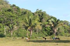 betande hästar Arkivbilder
