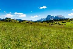 Betar i Dolomites, den Langkofel gruppen, Italien Royaltyfri Bild