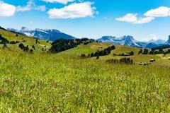 Betar i Dolomites, den Langkofel gruppen, Italien Arkivbild