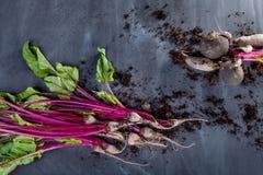 Betasidor och rödbeta med jord på svart Royaltyfria Bilder